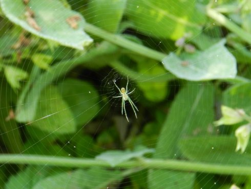Photograph of a spider in its spider web