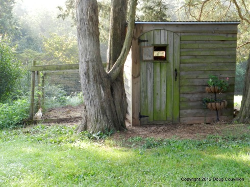 photograph of a henhouse in the early morning light