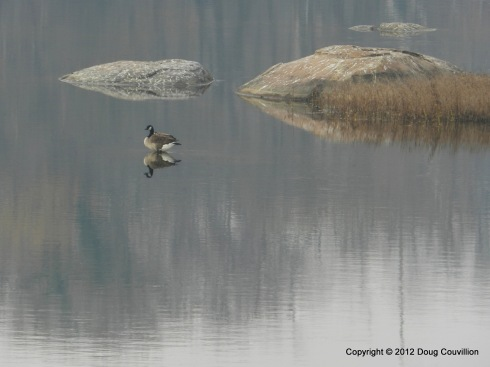 photograph of a canada goose and its reflection on the James River in Richmond, VA