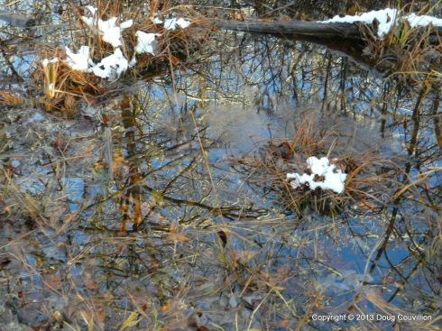 photograph of trees reflected in a puddle of melting snow