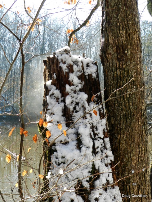 photograph of steam coming off a log as snow melts