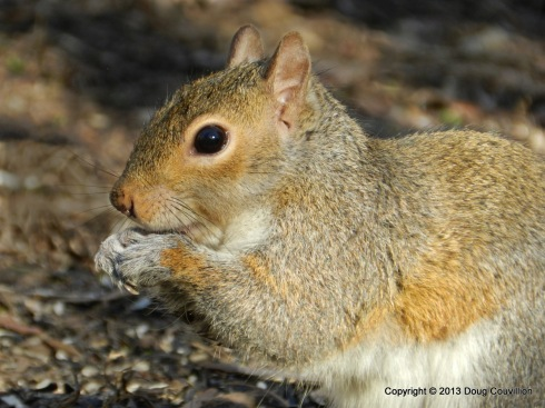 photograph of a squirrel eating seeds