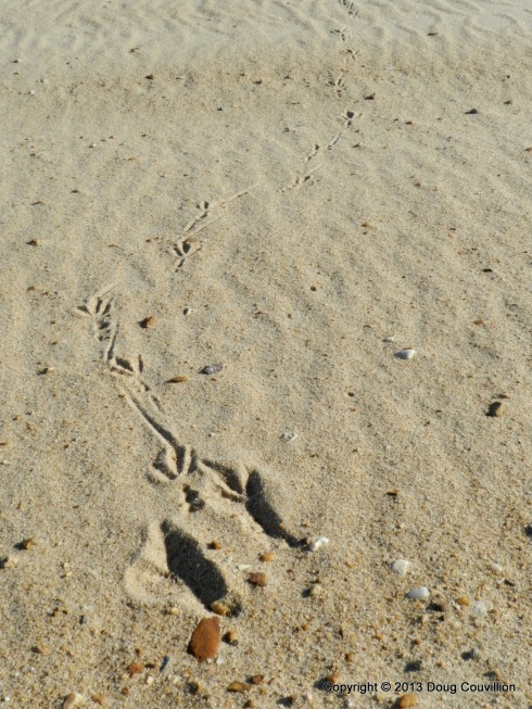 photograph of bird tracks on a beach
