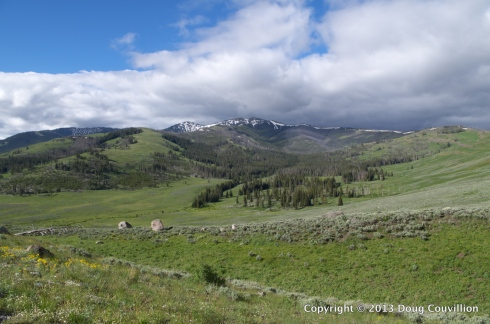 photograph of an alpine meadow in Yellowstone National Park