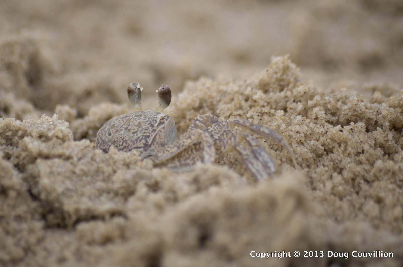 macro photograph of a small crab in the sand on the beach