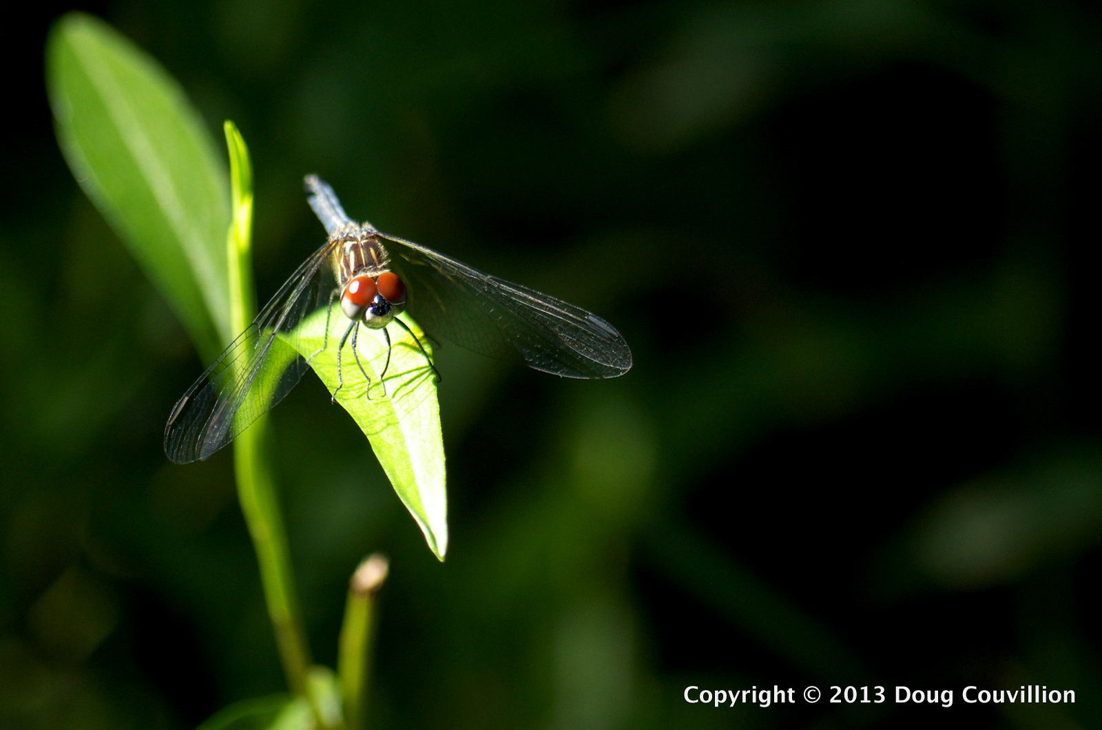 photograph of a dragonfly with bright red eyes resting on a green leaf