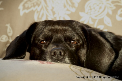 photograph of a black dog resting in the sun light