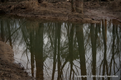 photograph of trees reflected in a shallow creek