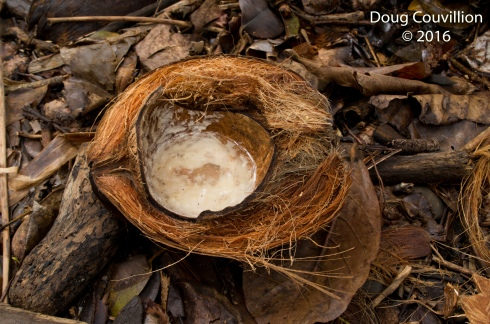 Photography by Doug Couvillion: A mostly emptied half of a coconut husk laying on the ground